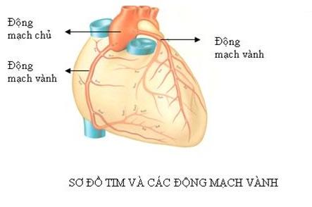 Những điều cần biết về bệnh động mạch vành