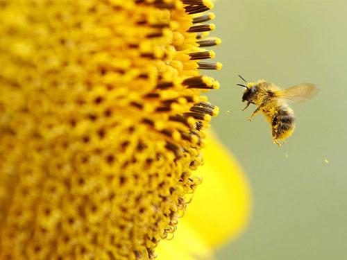 """Ong cứu """"bản lĩnh"""" đàn ông"""