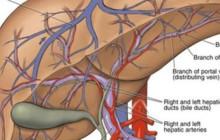 Dấu hiệu của gan đang bị nhiễm độc bạn không nên bỏ qua