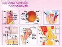 Công dụng của collagen đối với cơ thể