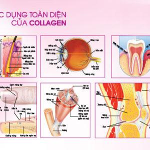 Công dụng của collagen đối với làn da và cơ thể con người