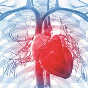 Những dấu hiệu cho thấy bạn có nguy cơ mắc bệnh tim mạch