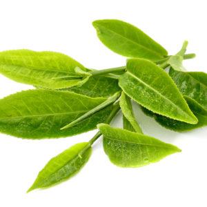 Cách chữa bệnh chàm tại nhà bằng lá cây