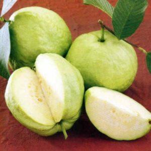 Một số trái cây điều trị bệnh tiêu chảy