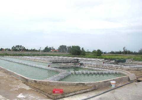 Tìm hiểu vì sao tảo xoắn chọn quỳnh lưu, nghệ an để nuôi