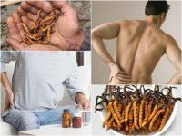Sử dụng tiên dược đông trùng hạ thảo gây suy thận