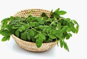 Thành phần dưỡng chất có trong lá cây chùm ngây