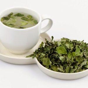 Tác dụng của trà chùm ngây trong việc hanh thông
