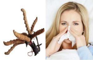 Tác dụng của đông trùng hạ thảo đối với hệ miễn dịch của cơ thể