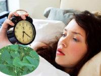 Điều trị mất ngủ bằng lá vông nem