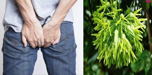 Ngoài lá thiên lý thì hoa thiên lý cũng được dùng để điều trị bệnh trĩ