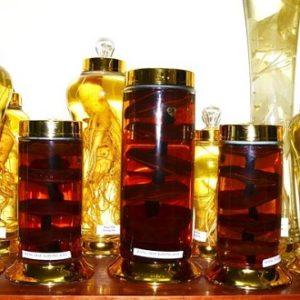 Điểm danh các loại rượu nấm linh chi và tác dụng của rượu nấm linh chi