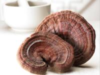 Sấy khô nấm linh chi để bảo quản được lâu