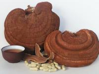 Hướng dẫn cách sơ chế và bào chế nấm linh chi