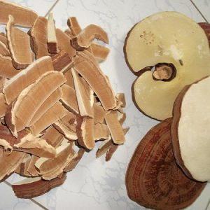 Điểm danh các loại nấm linh chi bán tại thị trường Việt