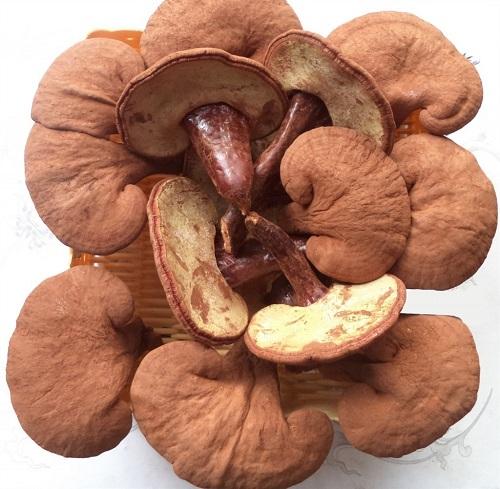 Thị trường nấm linh chi ngày càng phong phú, đa dạng