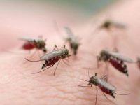 6 khuyến cáo giúp phòng tránh bệnh sốt xuất huyết hiệu quả nhất