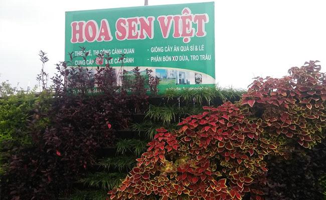 Cây Xanh Cảnh Quan Hoa Sen Việt