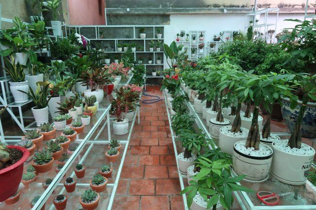 Vườn Cây Việt địa chỉ bán cây cảnh uy tín