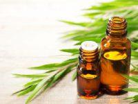 4 cách dùng tinh dầu tràm trà trị sẹo lồi hiệu quả