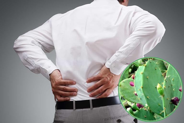 Xương rồng có khả năng chữa bệnh tốt cho bệnh đau nhức xương khớp