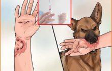 Tiêm phòng chó dại cắn có ảnh hưởng gì không